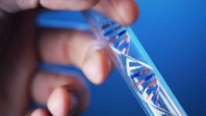 ДНК экспертиза