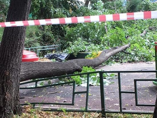 Какие действия предпринимать, если дерево упало на машину