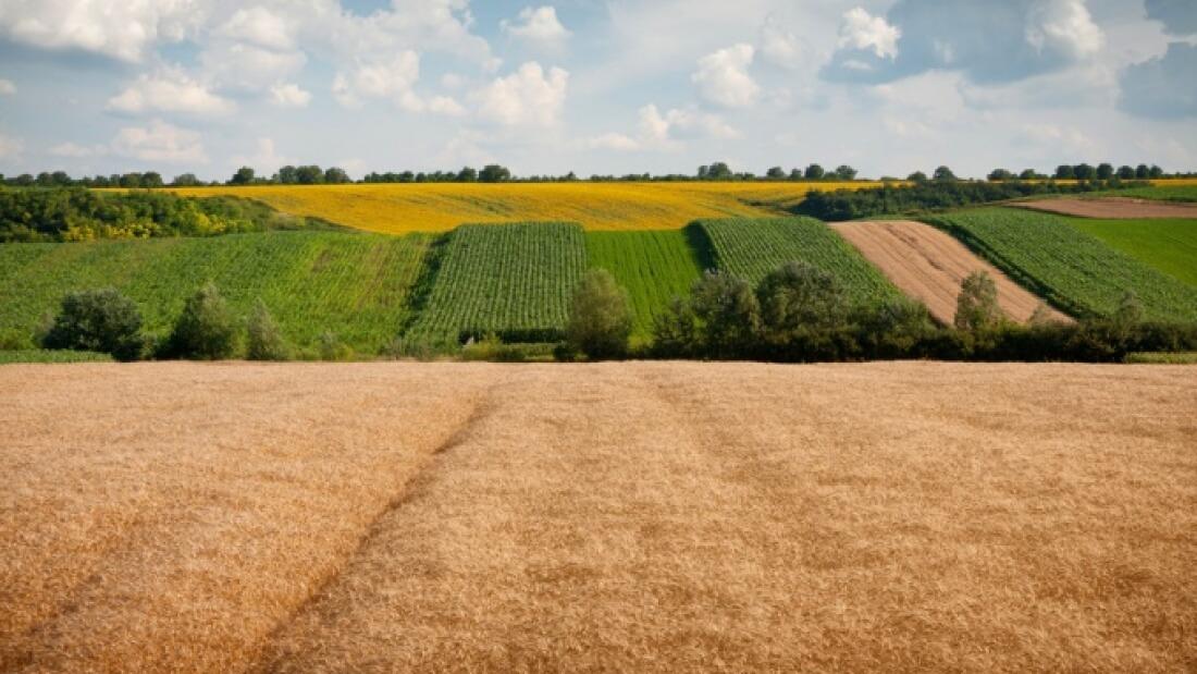 Земельный участок в наследство: оформление и принятие