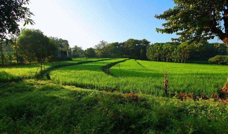 Земля в наследство и как оформить право собственности на пай