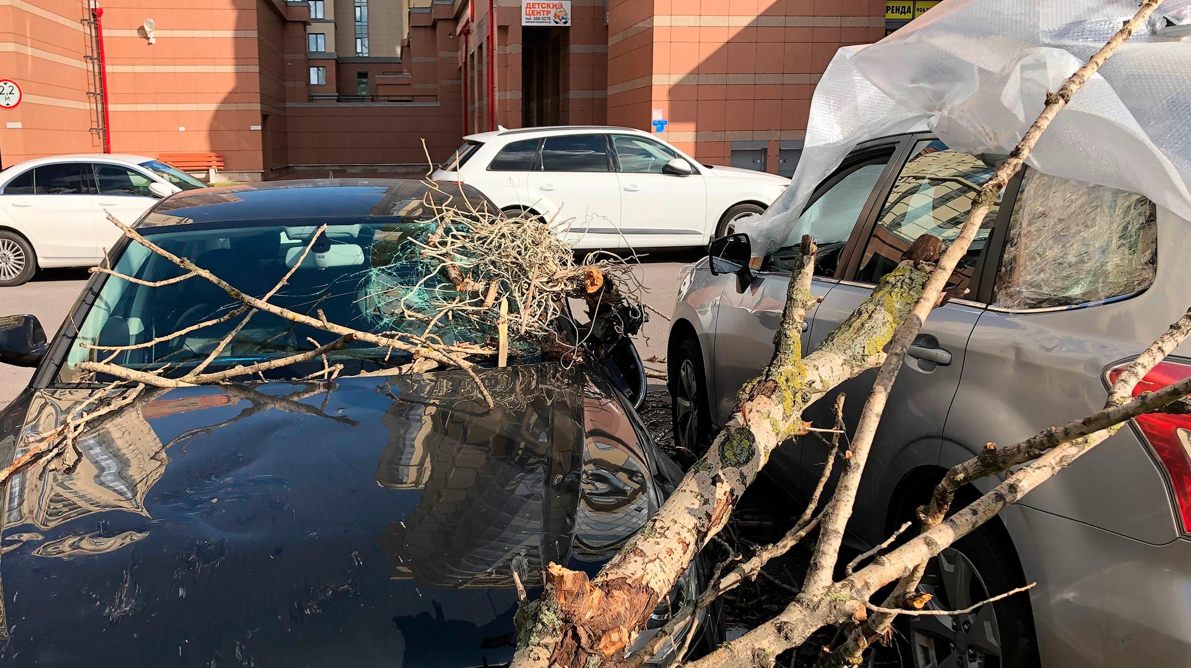 Дерево упало на машину: что делать, куда обращаться