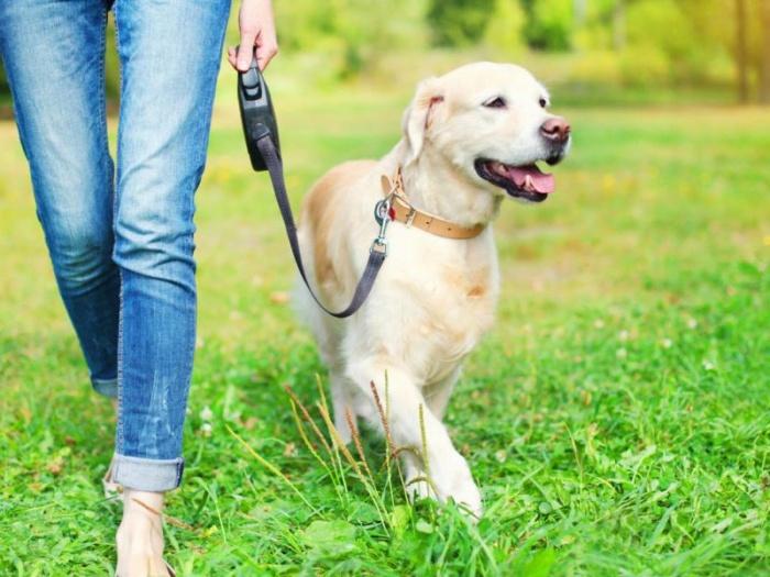 Какие собаки должны носить намордник по закону?