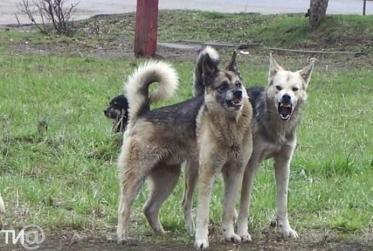 Выгул собак без намордника: чем грозит и куда жаловаться