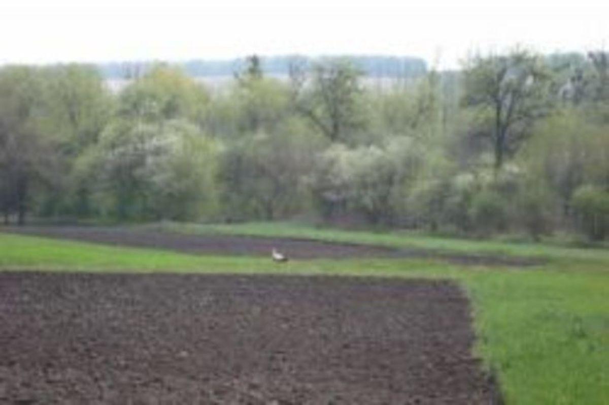 Земельный пай как оформить в наследство