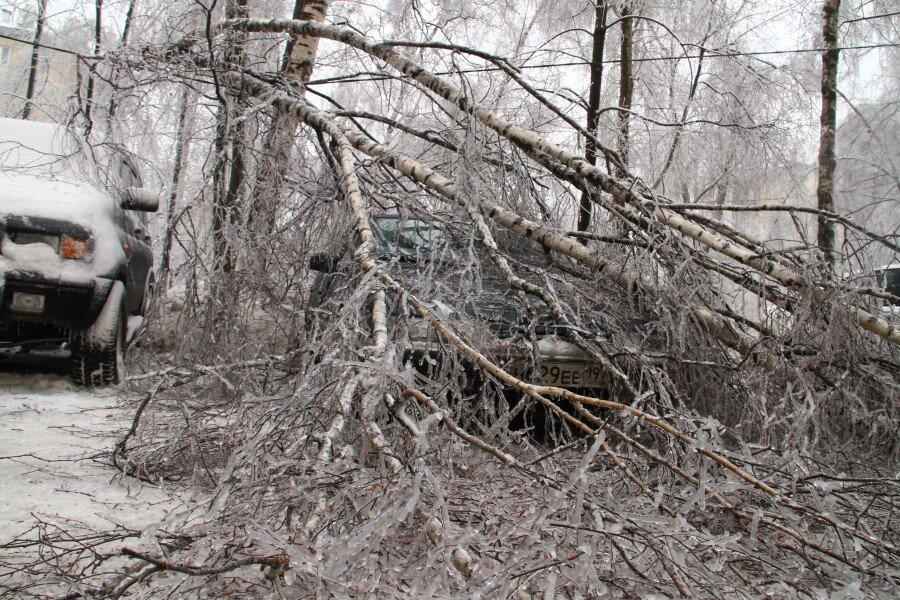 Куда обращаться, если на машину упало дерево