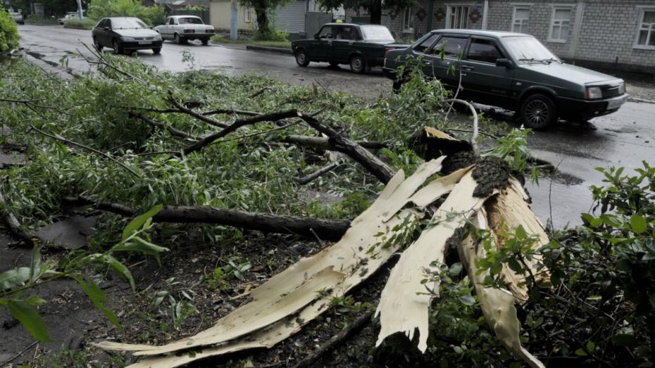 Порядок действий, если на автомобиль упало дерево