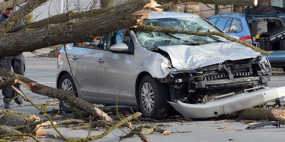 Дерево упало на машину: кто виноват, что делать и куда обращаться