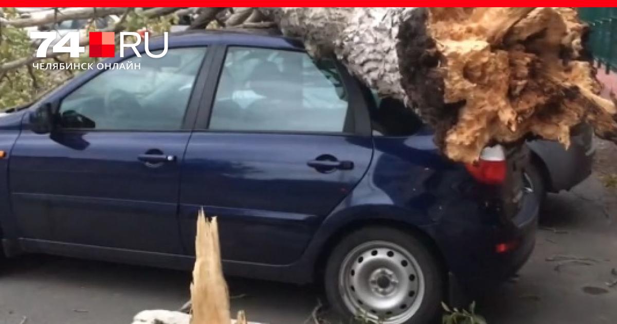 На машину упало дерево – что делать и кто отвечает?