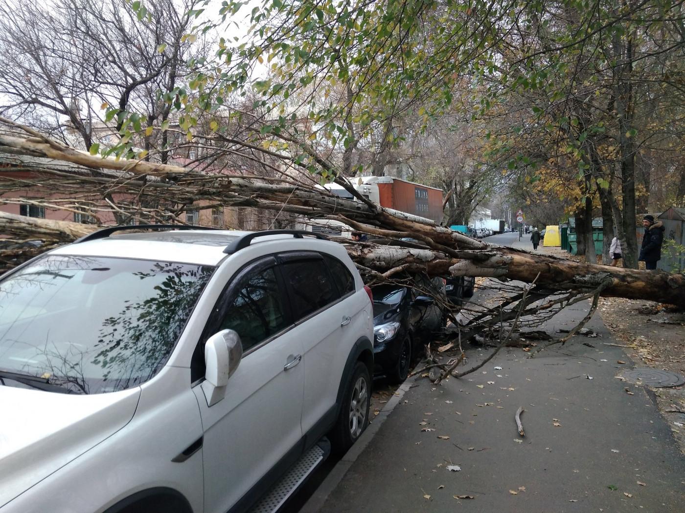 На машину упало дерево: как возместить ущерб и чего делать точно не нужно
