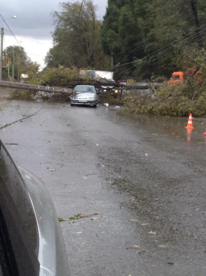 На машину упало дерево – что делать и кто заплатит за ущерб
