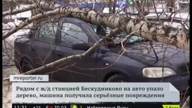 Если на машину упало дерево...