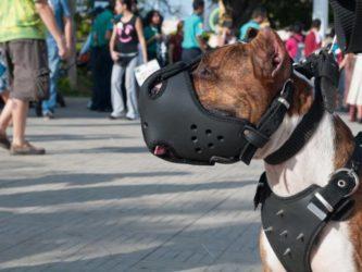 Статьи какого закона определяют ответственность за выгул собаки без намордника и поводка – коап или иного?