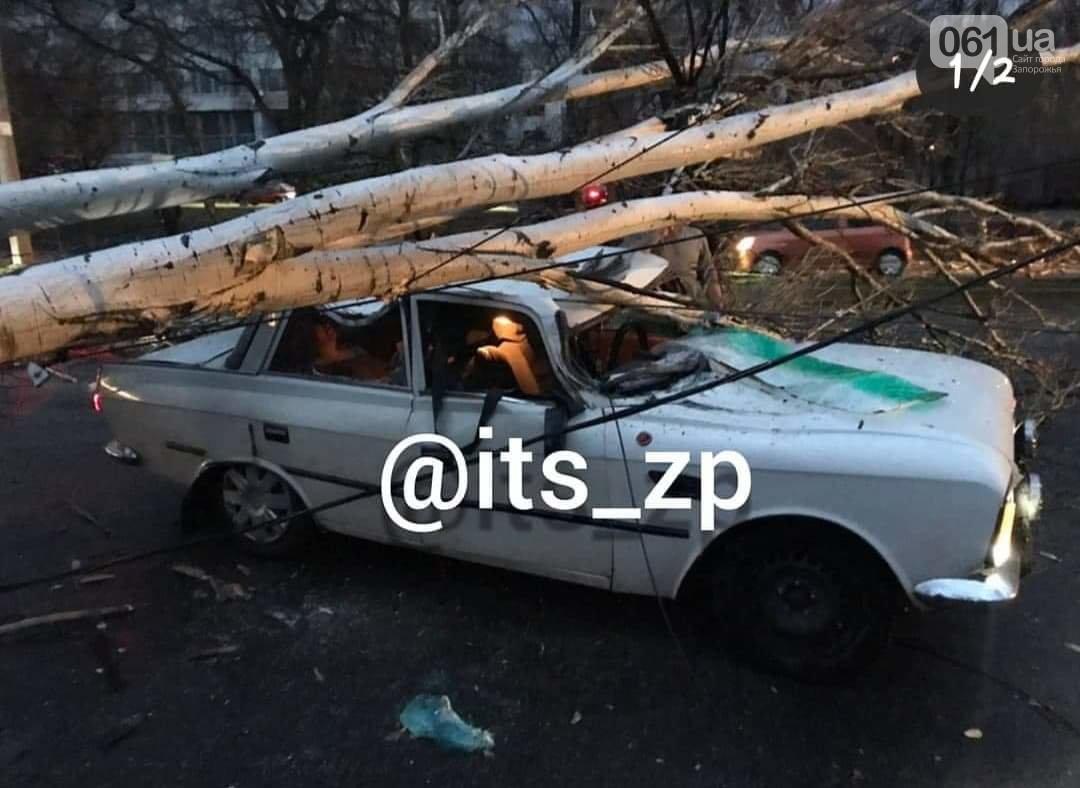 На машину упало дерево — что делать
