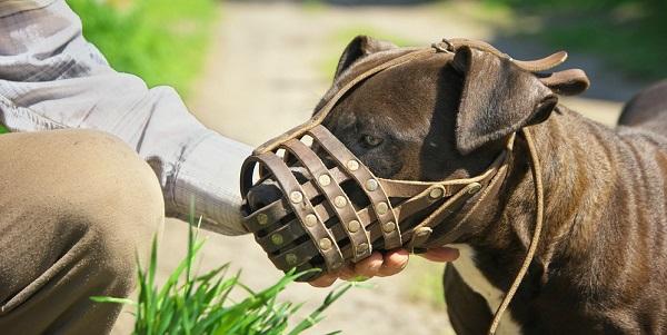 Породы собак, которые должны выгуливаться в наморднике