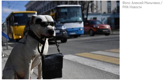 Породы собак, которых запрещено выгуливать без намордника и поводка по новым правилам: список