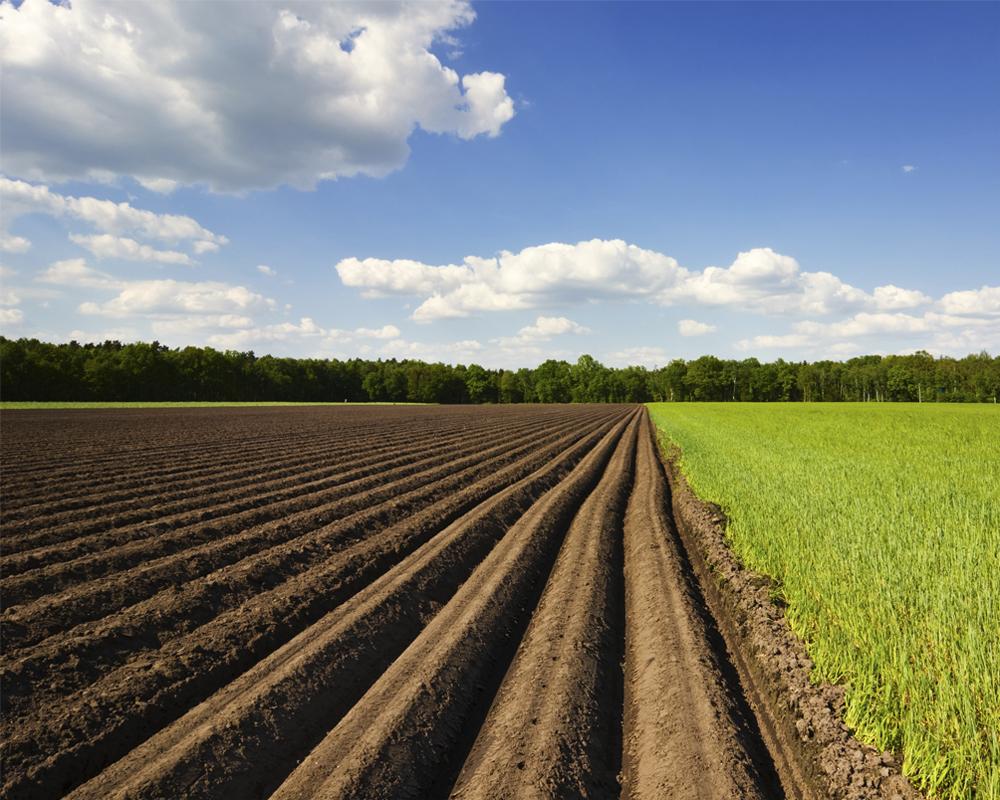 Оформление права собственности на земельный пай в порядке наследования: процедура, сроки и необходимые документы