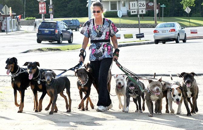 Как изменились правила выгула собак с 1 января 2020 г.