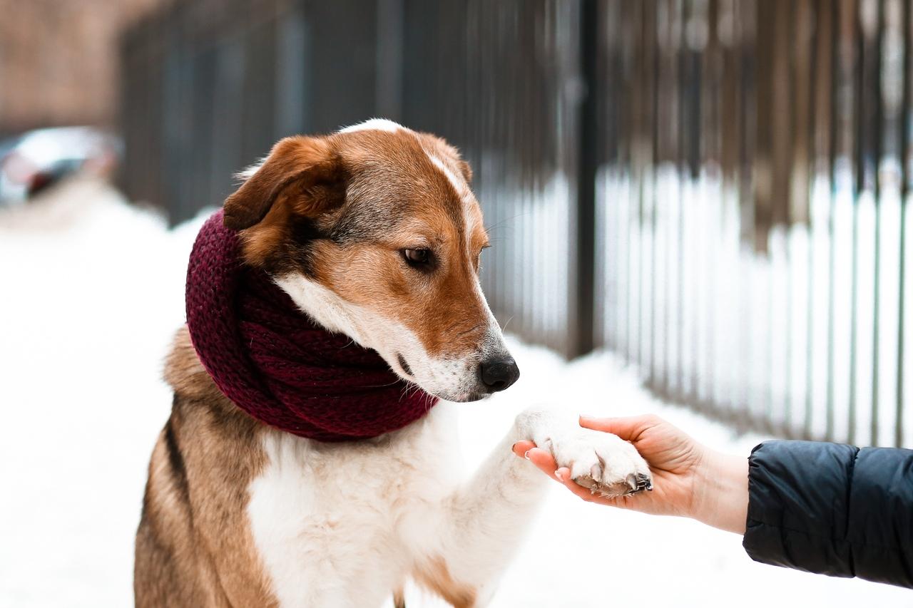 Можно ли выгуливать собаку без намордника