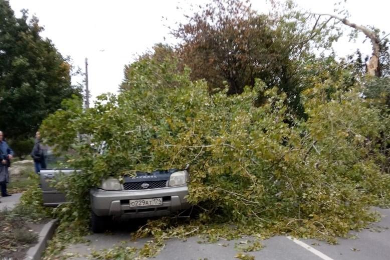 Советы юристов, что делать, если на машину упало дерево