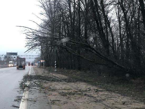 Что делать, если на машину упало дерево?